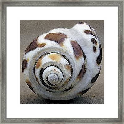 Seashells Spectacular No 2 Framed Print
