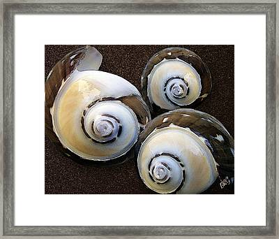 Seashells Spectacular No 23 Framed Print