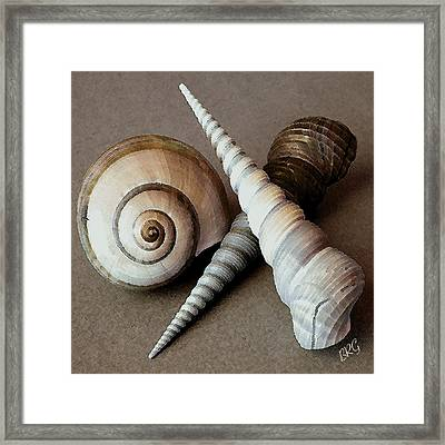Seashells Spectacular No 24 Framed Print