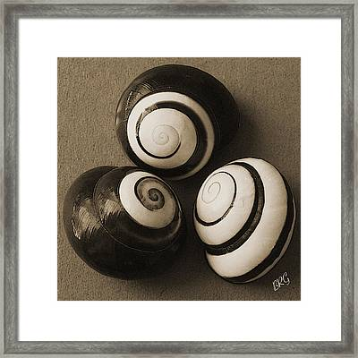 Seashells Spectacular No 28 Framed Print by Ben and Raisa Gertsberg