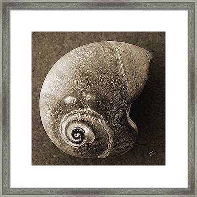 Seashells Spectacular No 31 Framed Print by Ben and Raisa Gertsberg