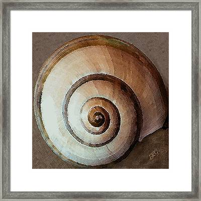 Seashells Spectacular No 34 Framed Print