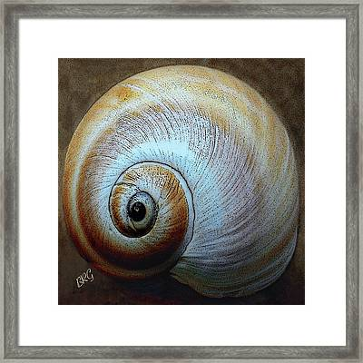 Seashells Spectacular No 36 Framed Print