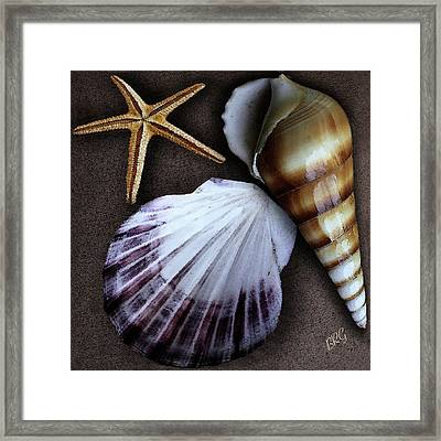 Seashells Spectacular No 37 Framed Print by Ben and Raisa Gertsberg