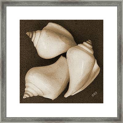 Seashells Spectacular No 4 Framed Print by Ben and Raisa Gertsberg