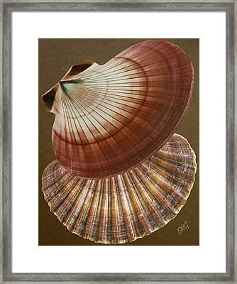 Seashells Spectacular No 53 Framed Print by Ben and Raisa Gertsberg