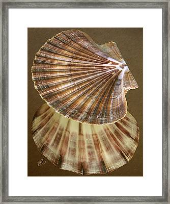 Seashells Spectacular No 54 Framed Print by Ben and Raisa Gertsberg