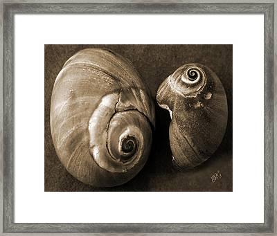 Seashells Spectacular No 6 Framed Print by Ben and Raisa Gertsberg