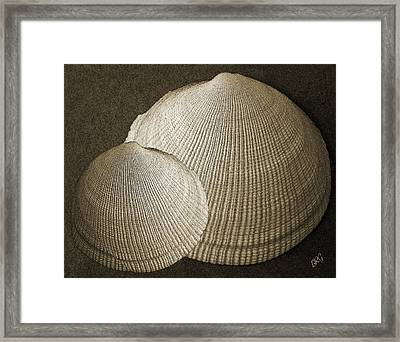 Seashells Spectacular No 8 Framed Print by Ben and Raisa Gertsberg