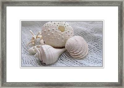 Seashells Study 1 Framed Print by Danielle  Parent