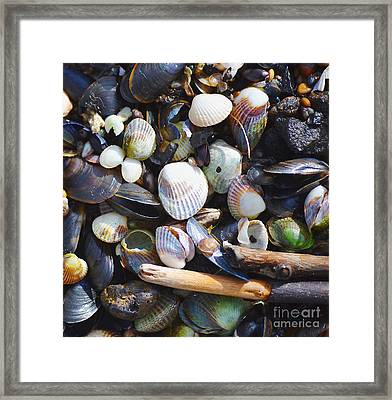 Seashells Framed Print by Tine Nordbred