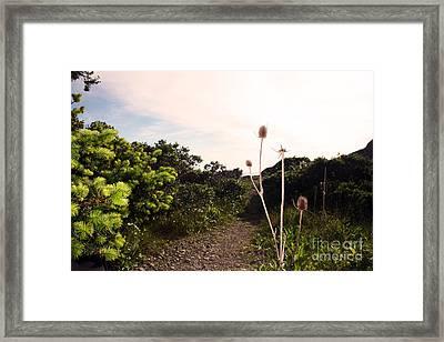 Seaside Flower Framed Print by Juan Romagosa