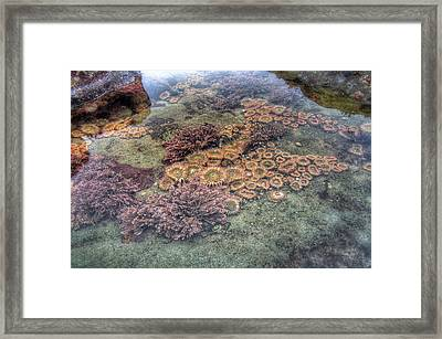 Seaside Garden Framed Print