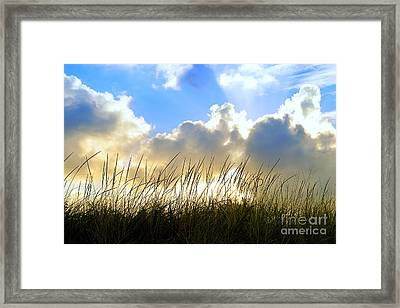 Seaside Grass And Clouds Framed Print