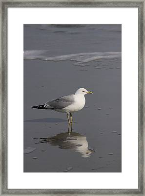 Seaside Sentinel Framed Print