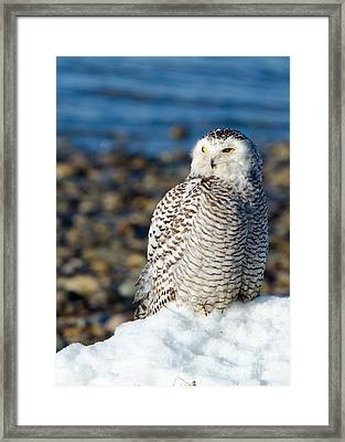 Winter At The Beach Framed Print