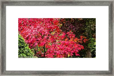 Season Ending Framed Print by Lauren MacIntosh