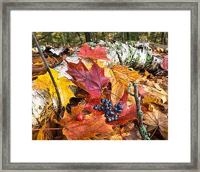 Season Finale  Framed Print by Bill Pevlor