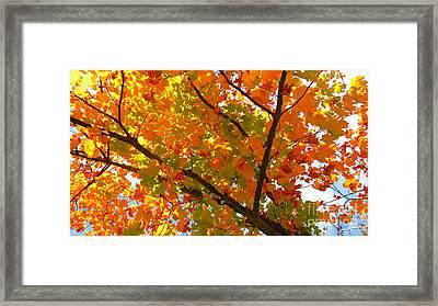 Season Of Change Framed Print by Scott Cameron