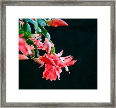 Seasonal Bloom Framed Print