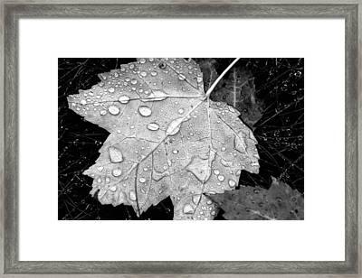 Seasonal Contrast Framed Print by Karol Livote
