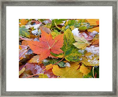 Seasonal Mix Framed Print by Rona Black