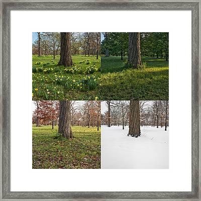 Seasonal Passage Number 3 Framed Print by Steve Gadomski