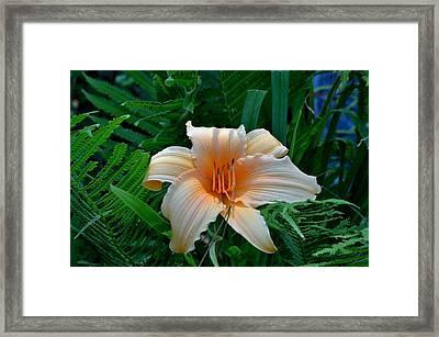 Seasonal Splendor Framed Print by Larry Jones