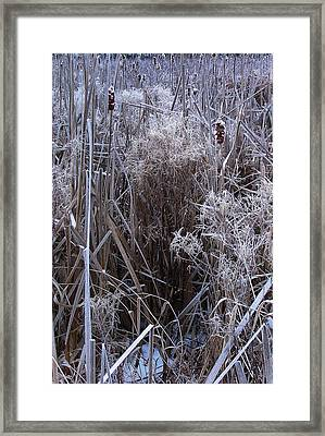 Seasonal Stand Of A Marsh Framed Print by Terrance DePietro