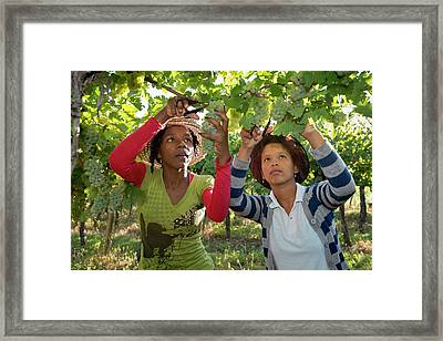 Seasonal Workers Harvesting Grapes Framed Print by Tony Camacho
