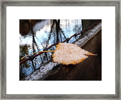 Seasons Balance Framed Print by Steven Milner