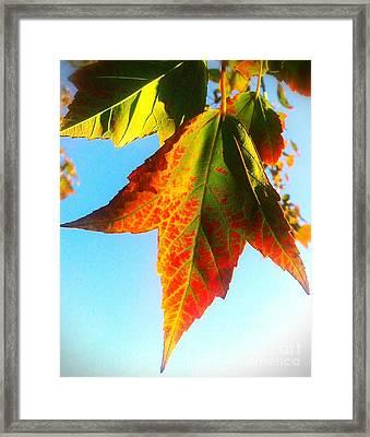 Season's Change Framed Print by James Aiken