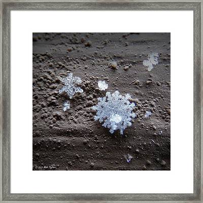 Season's First Flakes Framed Print