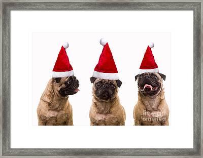 Seasons Greetings Christmas Caroling Pug Dogs Wearing Santa Claus Hats Framed Print