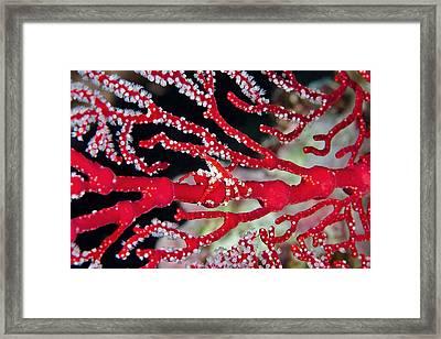 Season's Greetings Framed Print by Paula Marie deBaleau
