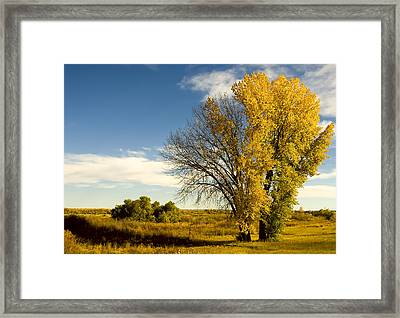 Seasons Framed Print