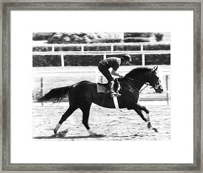 Seattle Slew Horse Racing #02 Framed Print