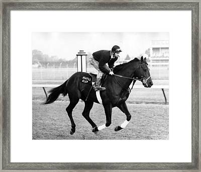 Seattle Slew Horse Racing #06 Framed Print by Retro Images Archive