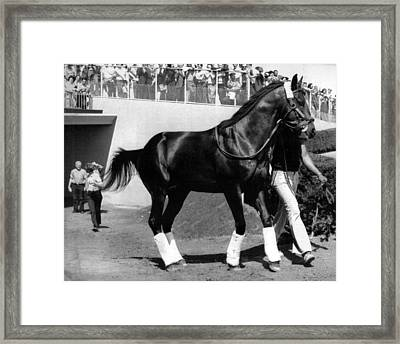 Seattle Slew Horse Racing #09 Framed Print