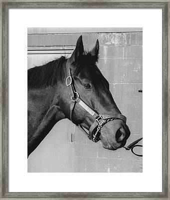 Seattle Slew Horse Racing #10 Framed Print by Retro Images Archive