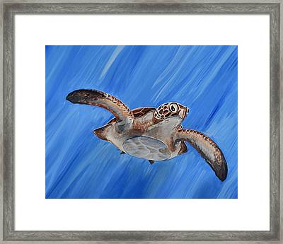 Seaturtle Framed Print