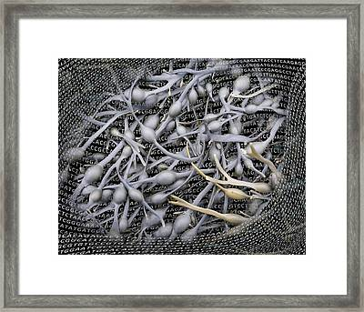 Seaweed And Its Dna Framed Print by Robert Brook