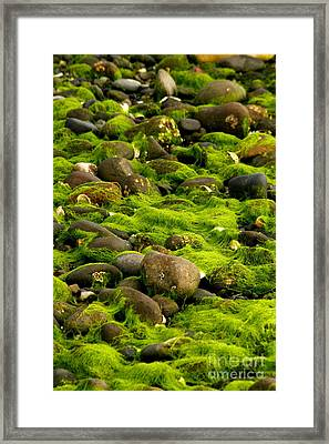 Seaweed And Rocks 2 Framed Print
