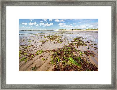 Seaweed And Sand Ripples Framed Print by Ashley Cooper