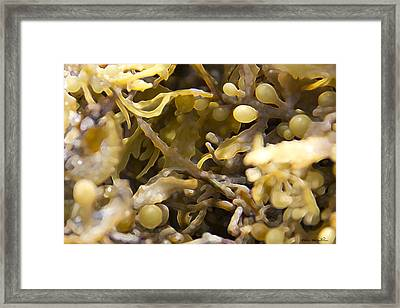 Framed Print featuring the photograph Seaweed by Kathy Ponce