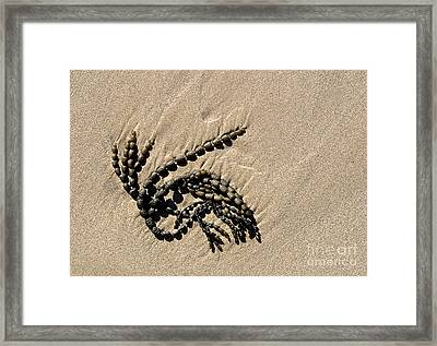 Seaweed On Beach Framed Print by Steven Ralser
