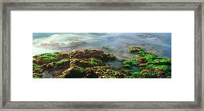 Seaweed On Rocks At The Coast, Las Framed Print