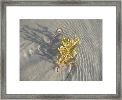 Seaweed Sand Framed Print