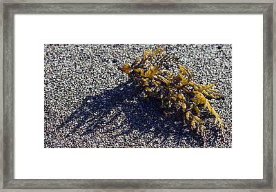 Seaweed Shadow Framed Print