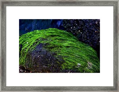Seaweed Framed Print by Victoria Clark